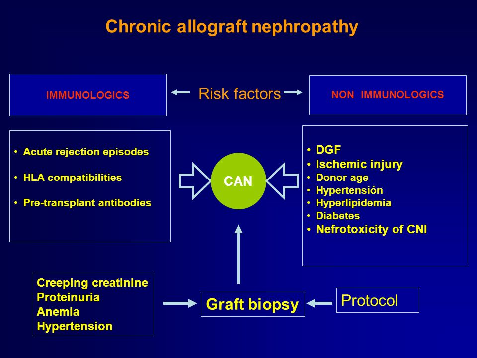 Chronic allograft nephropathy