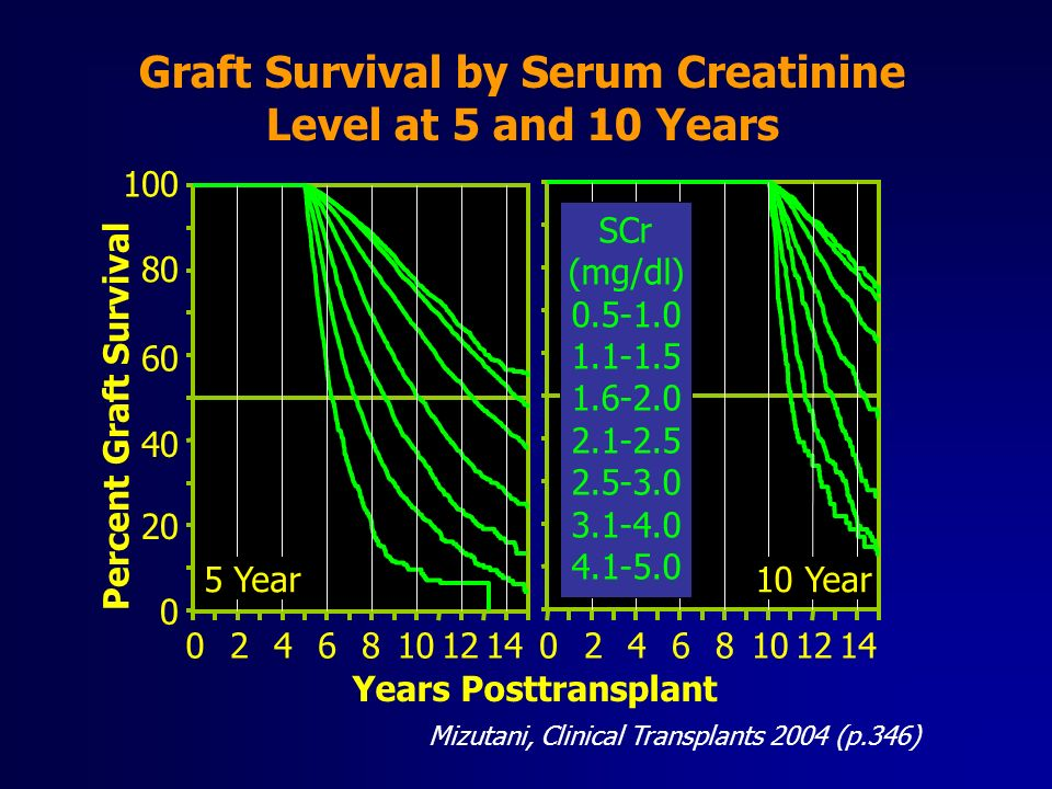 Graft Survival by Serum Creatinine Level at 5 and 10 Years