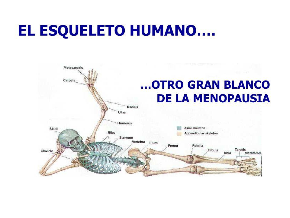 EL ESQUELETO HUMANO…. …OTRO GRAN BLANCO DE LA MENOPAUSIA