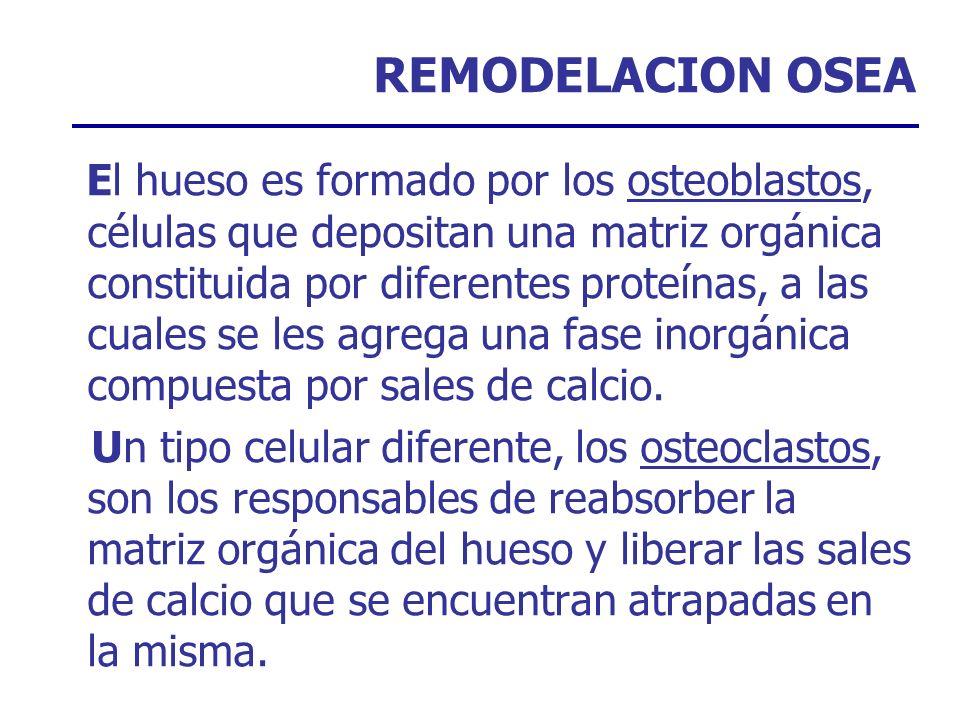 REMODELACION OSEA