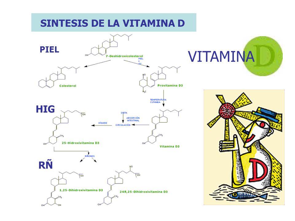 SINTESIS DE LA VITAMINA D