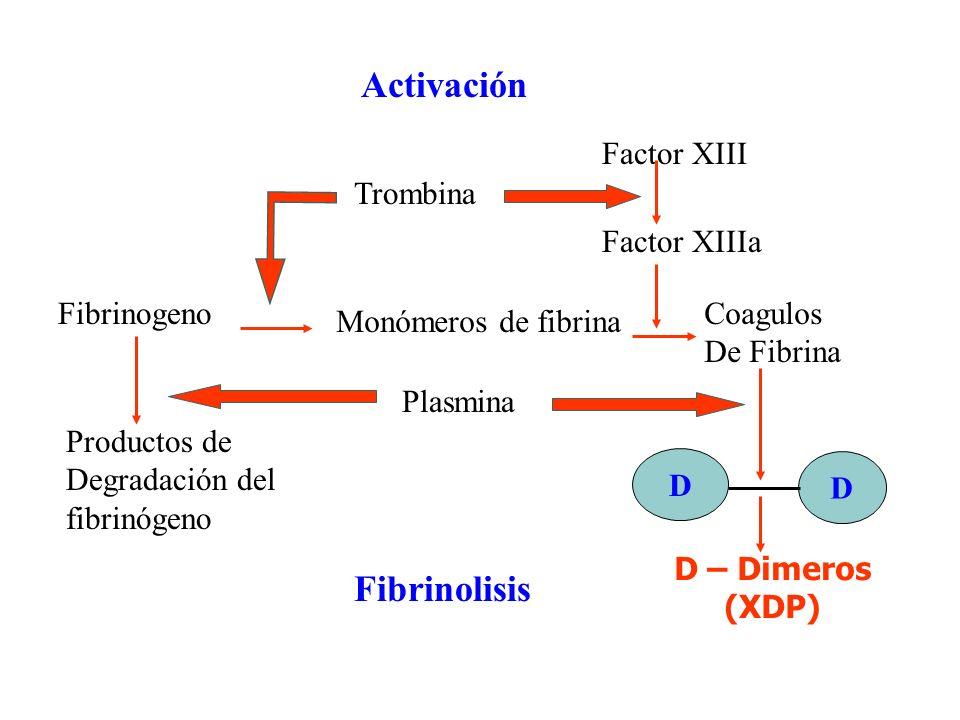 Activación Fibrinolisis Factor XIII Trombina Factor XIIIa Fibrinogeno