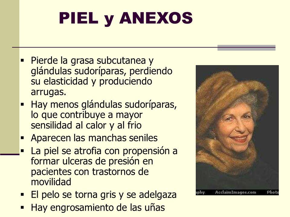 PIEL y ANEXOS Pierde la grasa subcutanea y glándulas sudoríparas, perdiendo su elasticidad y produciendo arrugas.