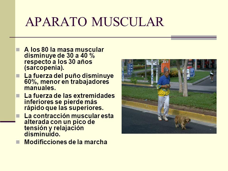 APARATO MUSCULAR A los 80 la masa muscular disminuye de 30 a 40 % respecto a los 30 años (sarcopenia).
