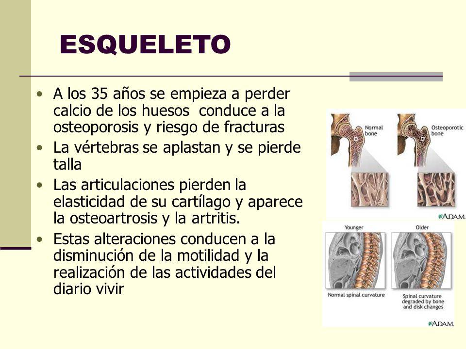 ESQUELETO A los 35 años se empieza a perder calcio de los huesos conduce a la osteoporosis y riesgo de fracturas.