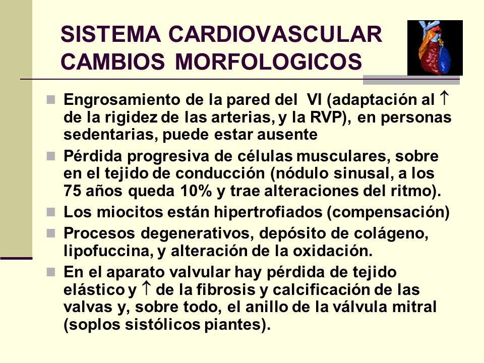 SISTEMA CARDIOVASCULAR CAMBIOS MORFOLOGICOS