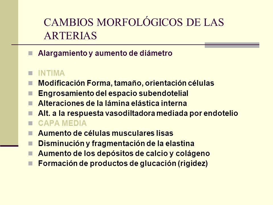 CAMBIOS MORFOLÓGICOS DE LAS ARTERIAS
