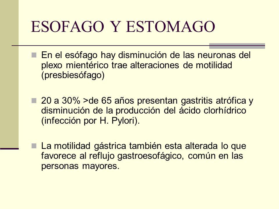 ESOFAGO Y ESTOMAGO En el esófago hay disminución de las neuronas del plexo mientérico trae alteraciones de motilidad (presbiesófago)