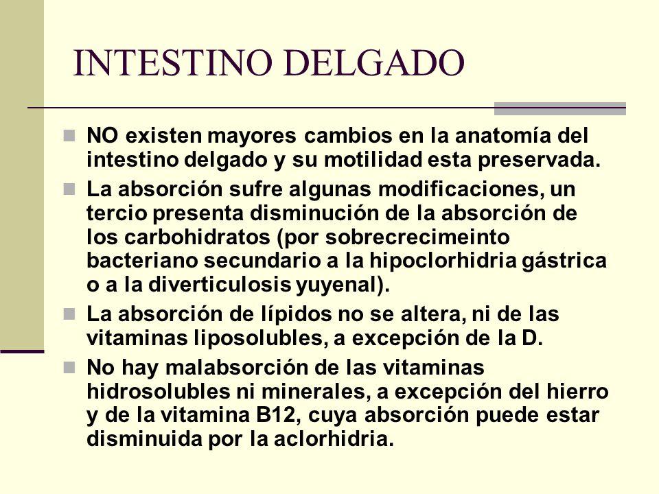 INTESTINO DELGADO NO existen mayores cambios en la anatomía del intestino delgado y su motilidad esta preservada.