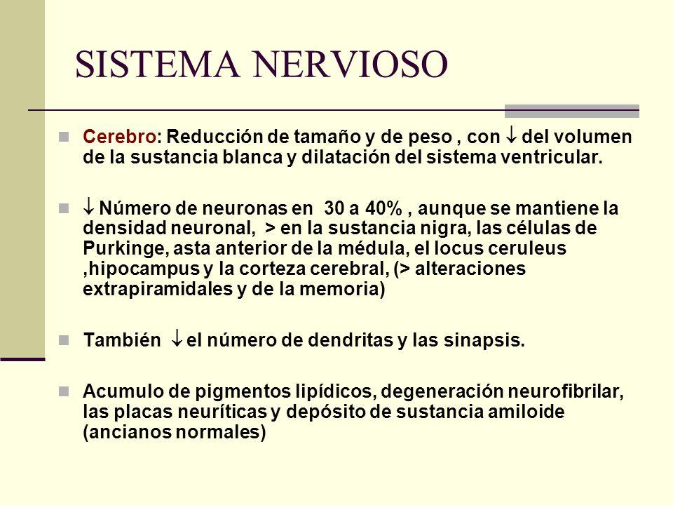 SISTEMA NERVIOSO Cerebro: Reducción de tamaño y de peso , con  del volumen de la sustancia blanca y dilatación del sistema ventricular.