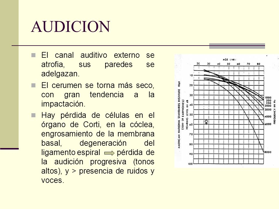 AUDICION El canal auditivo externo se atrofia, sus paredes se adelgazan. El cerumen se torna más seco, con gran tendencia a la impactación.