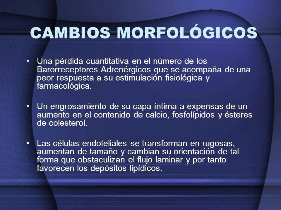 CAMBIOS MORFOLÓGICOS