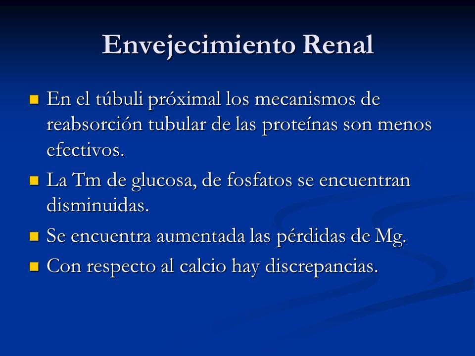 Envejecimiento Renal En el túbuli próximal los mecanismos de reabsorción tubular de las proteínas son menos efectivos.