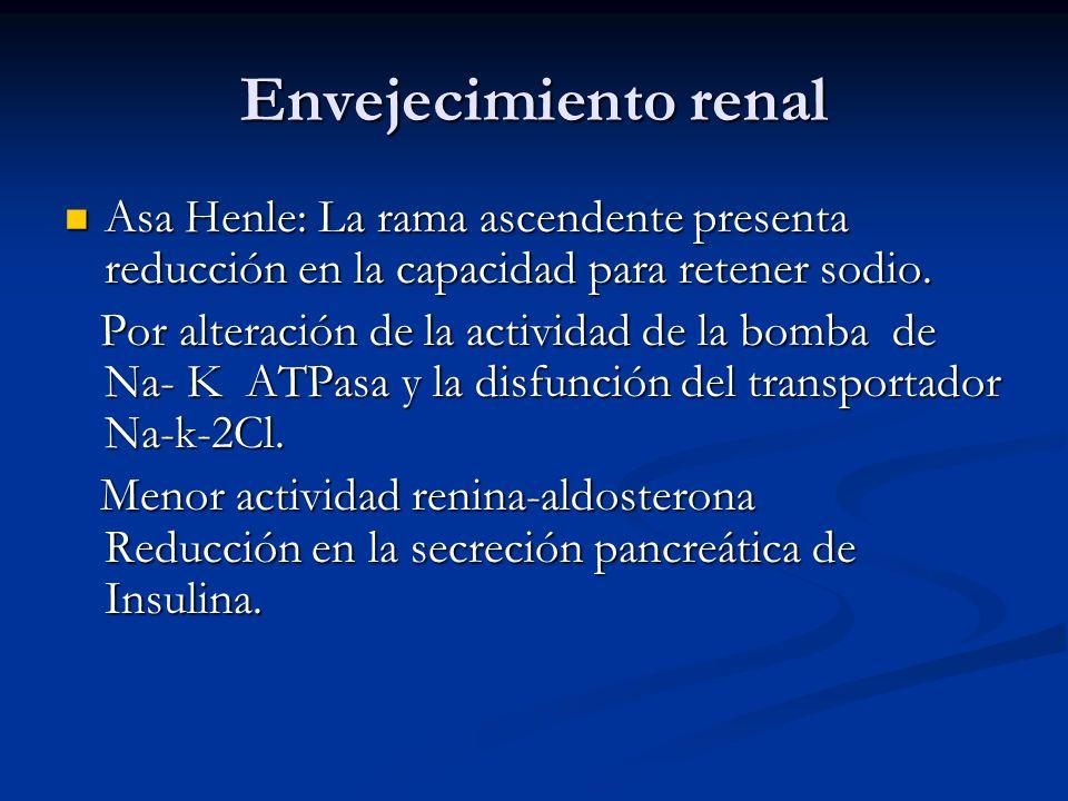Envejecimiento renal Asa Henle: La rama ascendente presenta reducción en la capacidad para retener sodio.