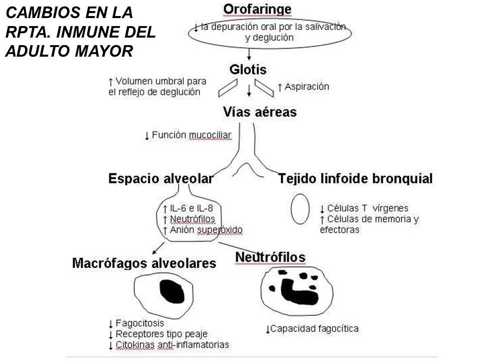 CAMBIOS EN LA RPTA. INMUNE DEL ADULTO MAYOR