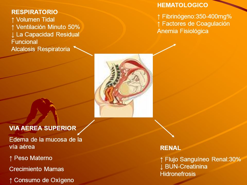 HEMATOLOGICO ↑ Fibrinógeno:350-400mg% ↑ Factores de Coagulación. Anemia Fisiológica. RESPIRATORIO.