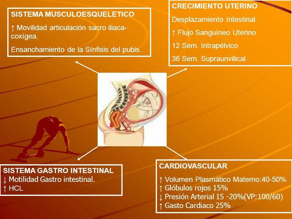 CRECIMIENTO UTERINO Desplazamiento Intestinal. ↑ Flujo Sanguíneo Uterino. 12 Sem. Intrapélvico. 36 Sem. Supraunvilical.