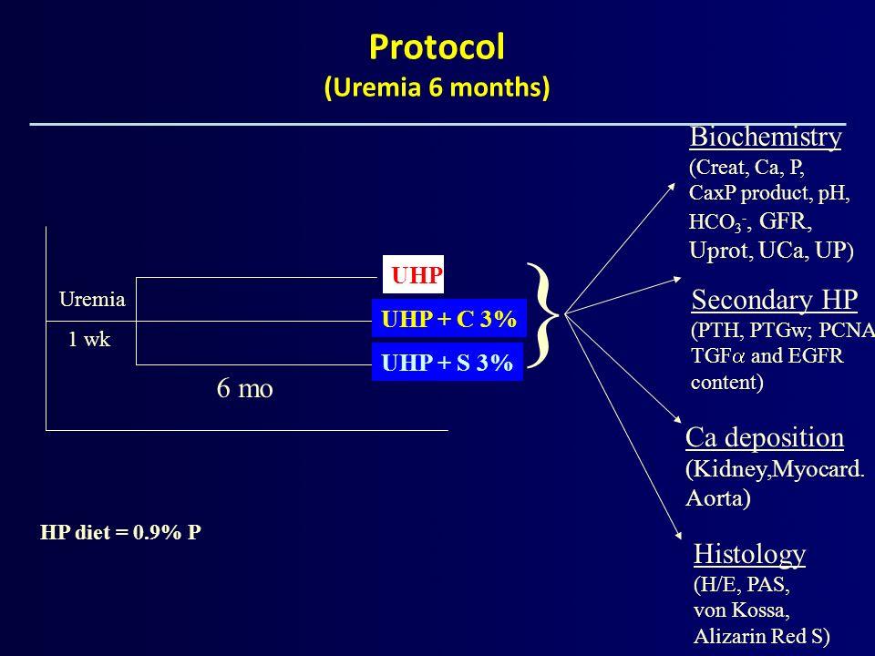 Protocol (Uremia 6 months)