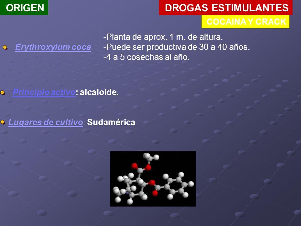 ORIGEN DROGAS ESTIMULANTES COCAINA Y CRACK