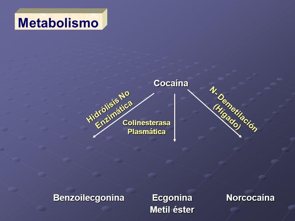 Metabolismo Cocaína Benzoilecgonina Norcocaína Ecgonina Metil éster