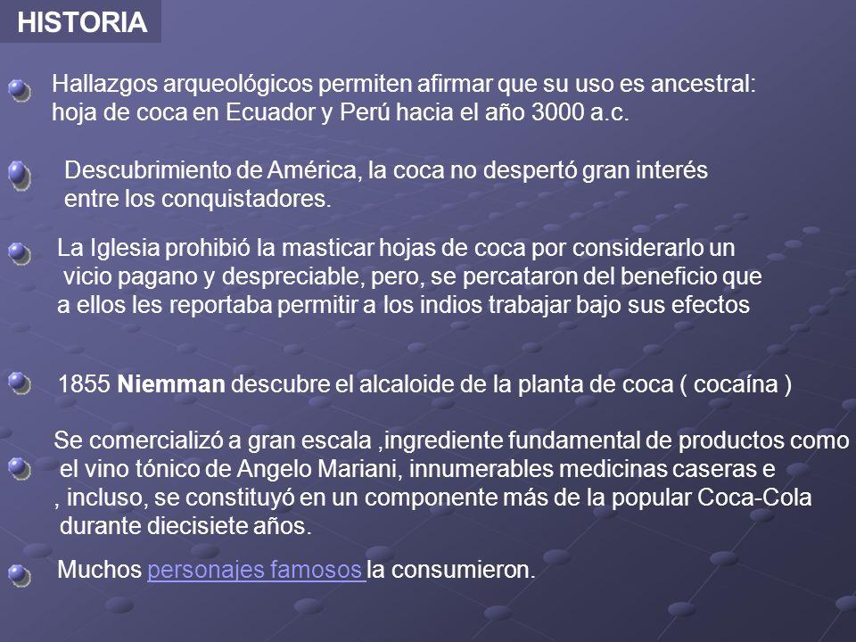 HISTORIA Hallazgos arqueológicos permiten afirmar que su uso es ancestral: hoja de coca en Ecuador y Perú hacia el año 3000 a.c.