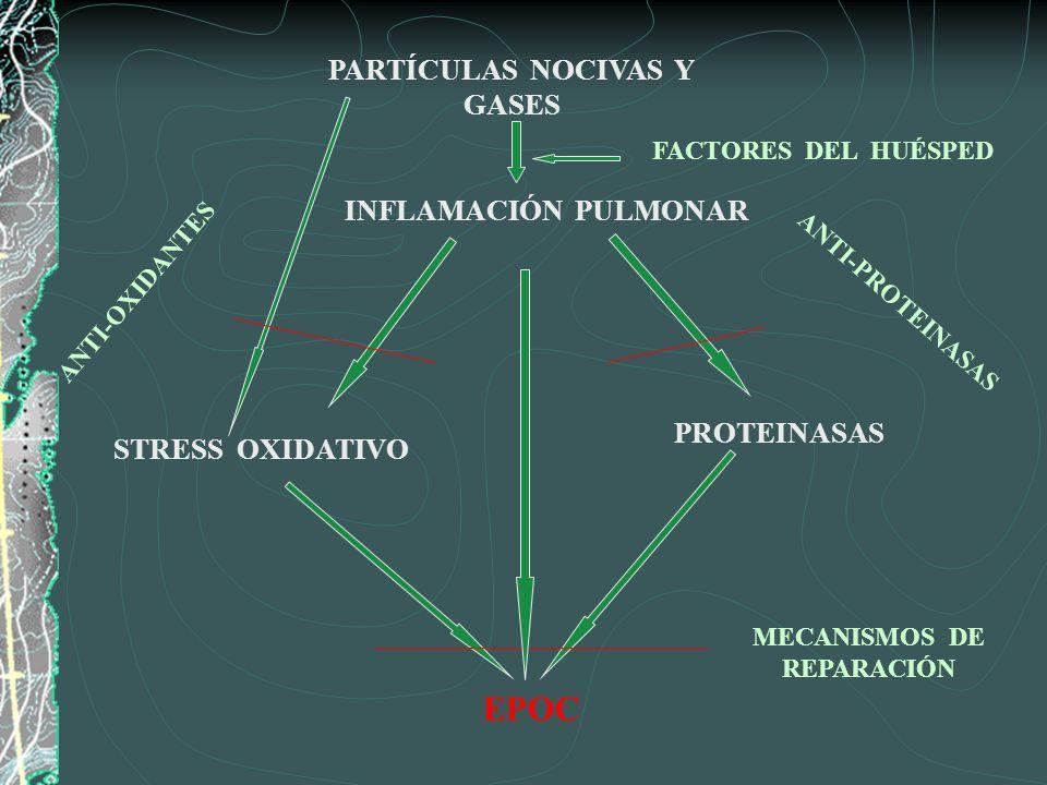 PARTÍCULAS NOCIVAS Y GASES MECANISMOS DE REPARACIÓN