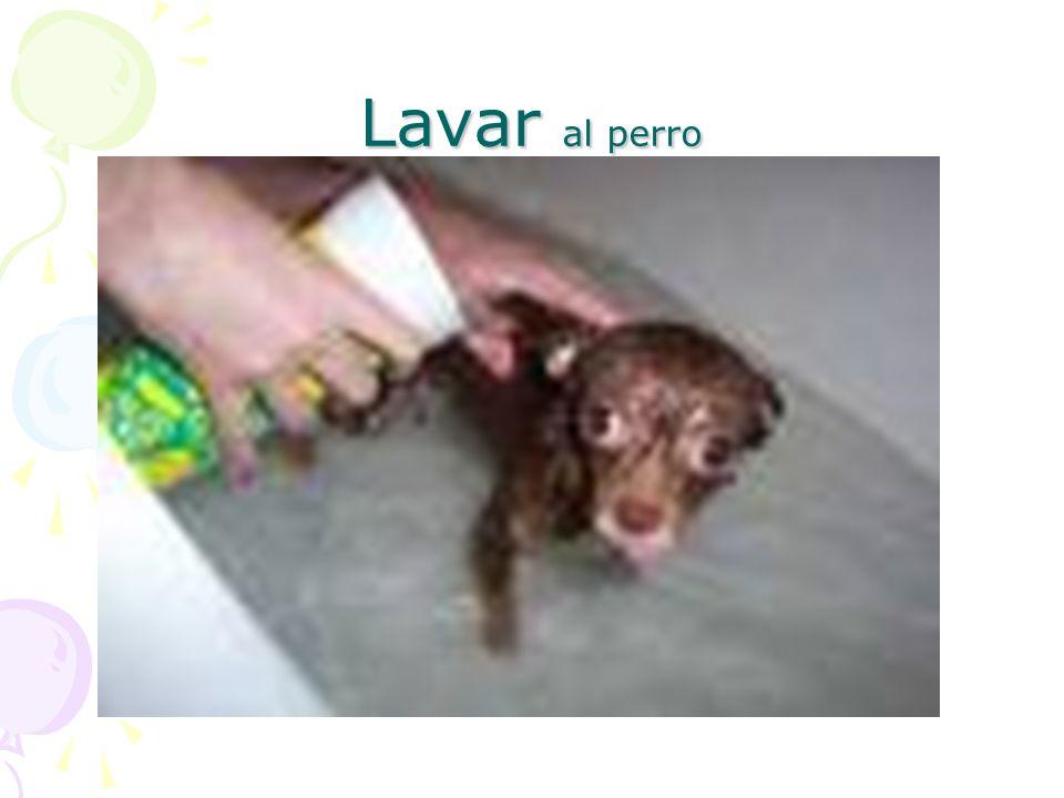 Lavar al perro