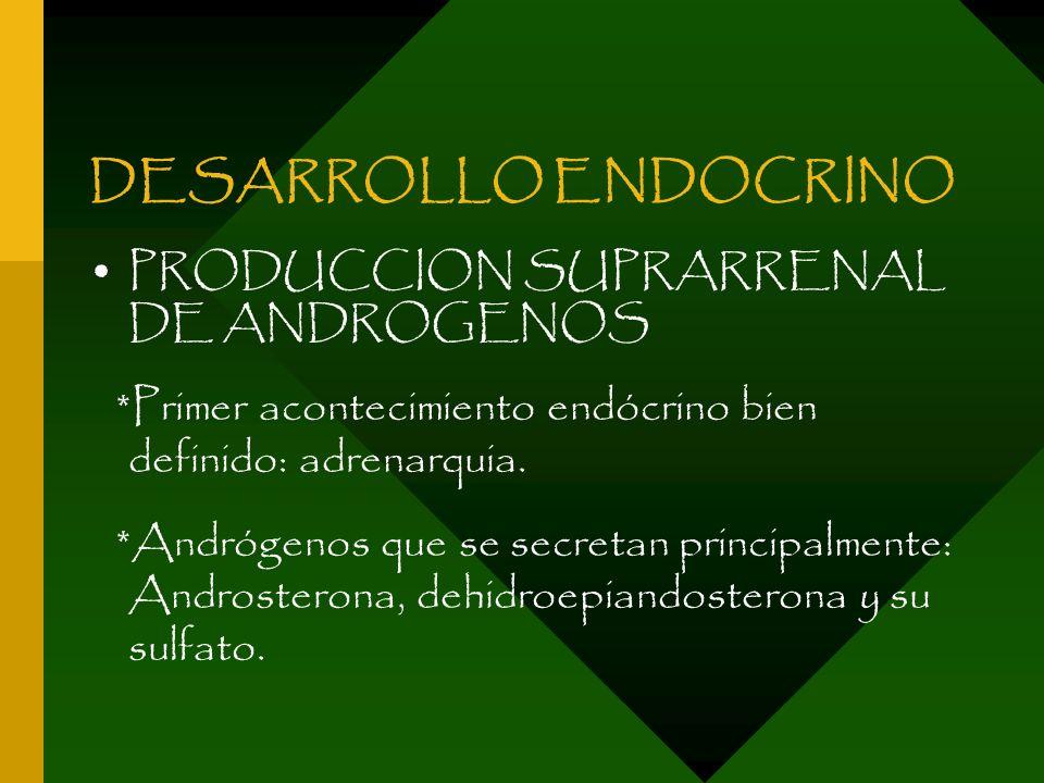 DESARROLLO ENDOCRINO PRODUCCION SUPRARRENAL DE ANDROGENOS