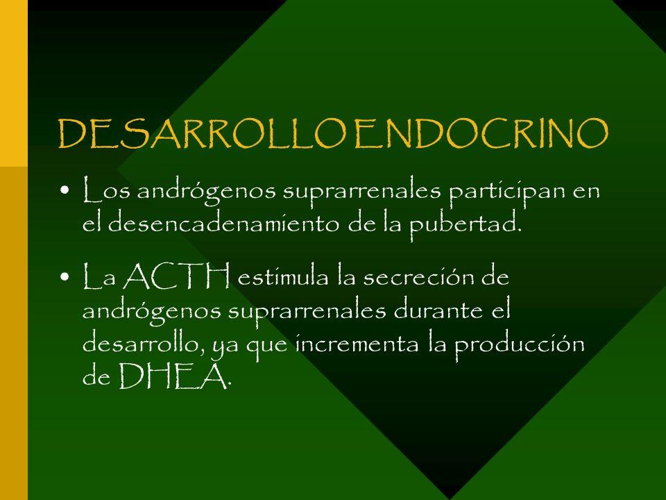DESARROLLO ENDOCRINOLos andrógenos suprarrenales participan en el desencadenamiento de la pubertad.