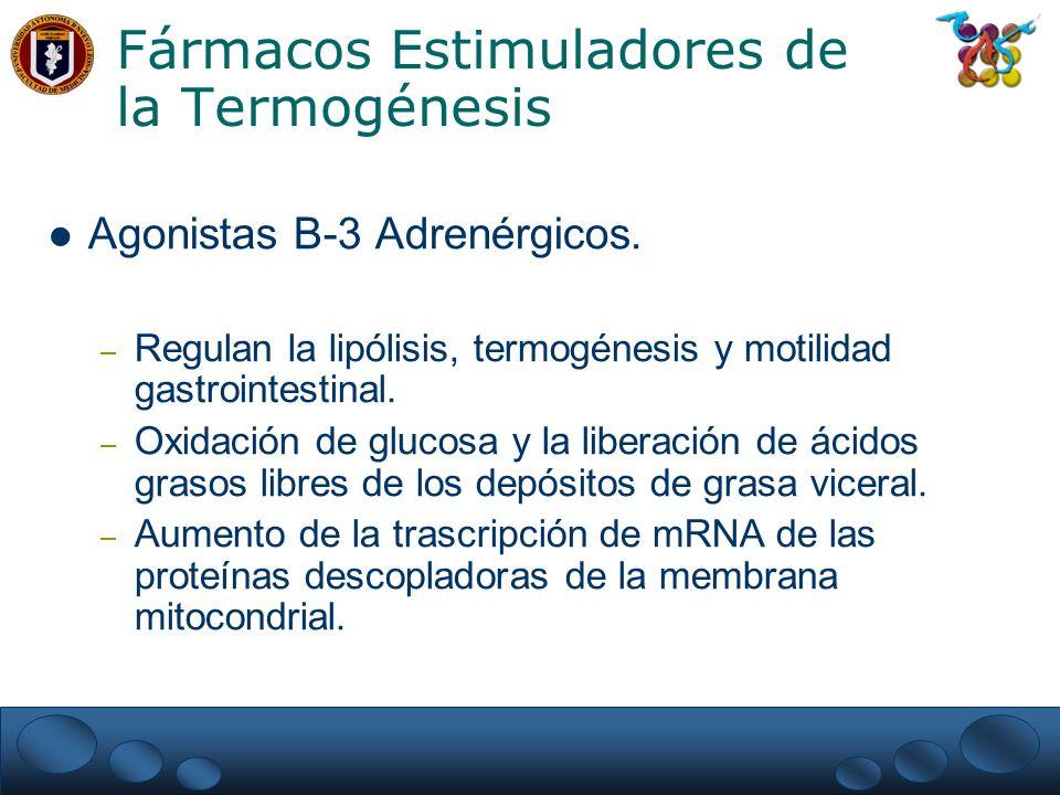 Fármacos Estimuladores de la Termogénesis
