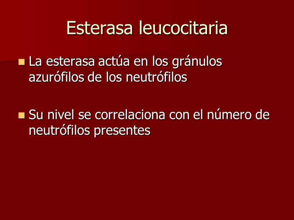 Esterasa leucocitaria