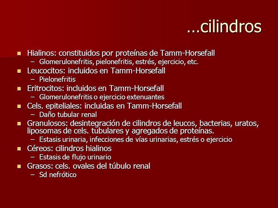 …cilindros Hialinos: constituidos por proteínas de Tamm-Horsefall