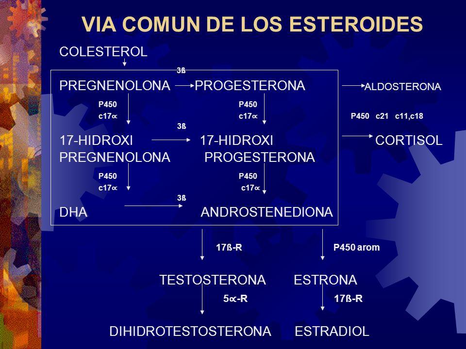 VIA COMUN DE LOS ESTEROIDES