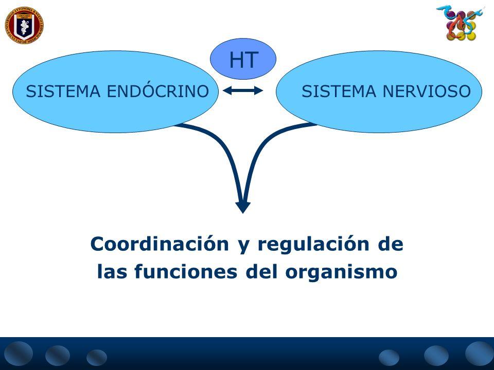 Coordinación y regulación de las funciones del organismo