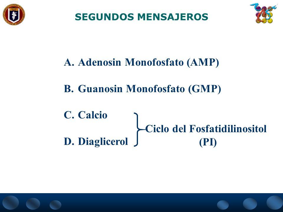 Ciclo del Fosfatidilinositol
