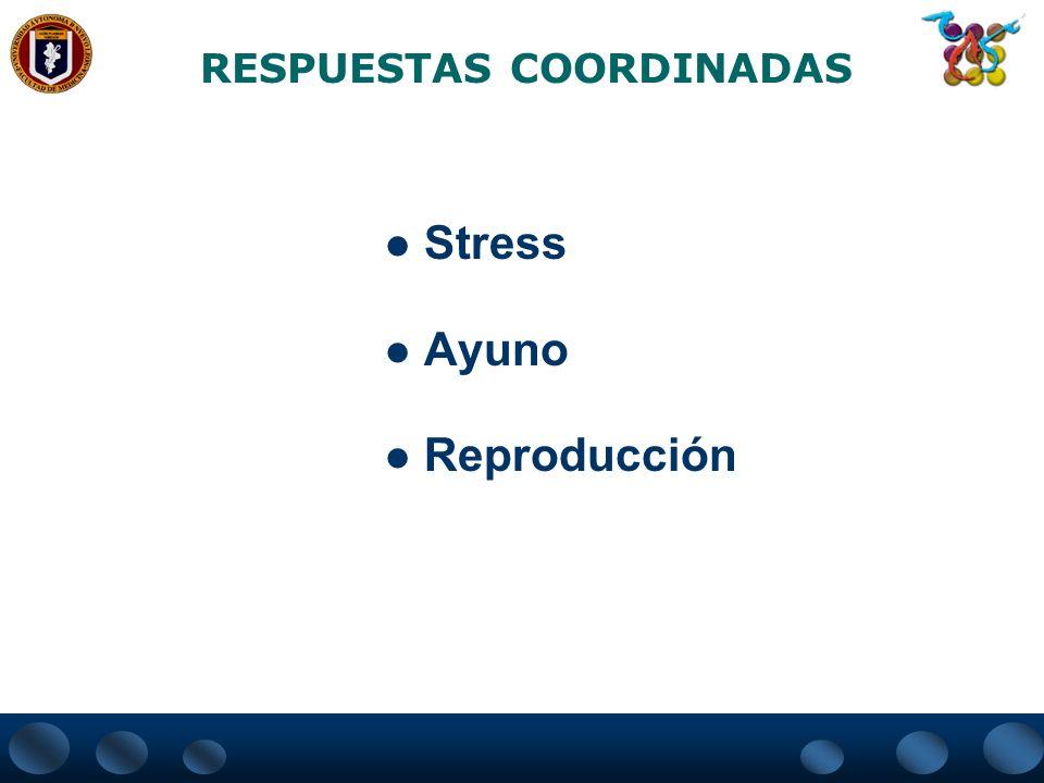 RESPUESTAS COORDINADAS