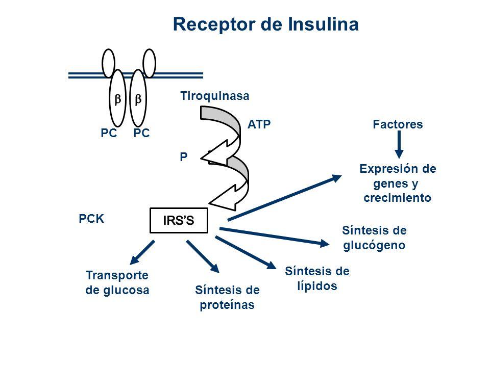Receptor de Insulina   Tiroquinasa ATP Factores Expresión de genes y