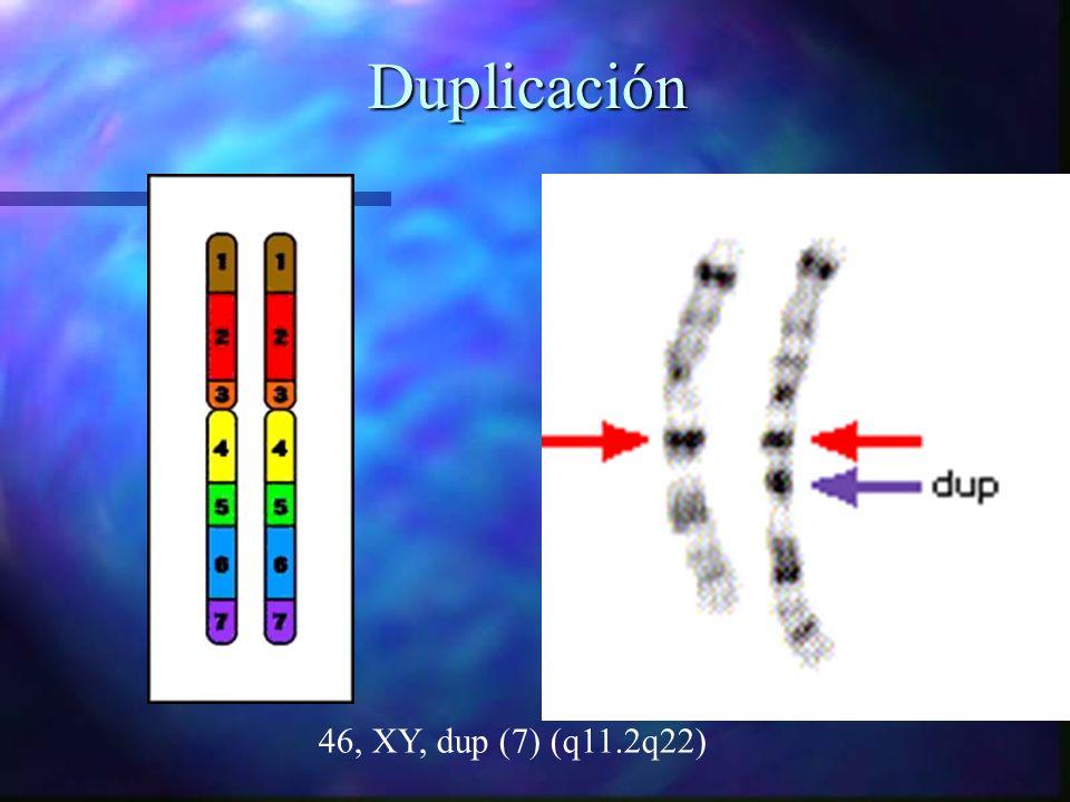 Duplicación 46, XY, dup (7) (q11.2q22)