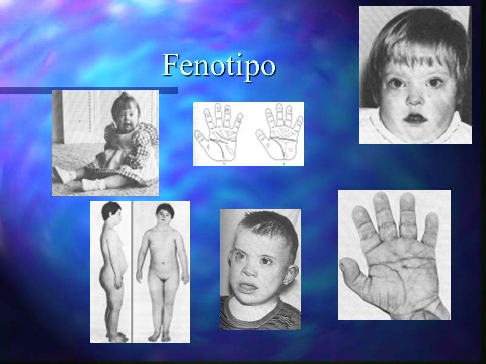 Fenotipo