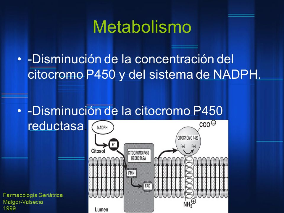 Metabolismo-Disminución de la concentración del citocromo P450 y del sistema de NADPH. -Disminución de la citocromo P450 reductasa.