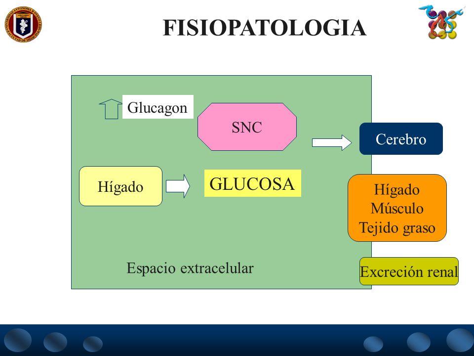 FISIOPATOLOGIA GLUCOSA Glucagon SNC Cerebro Hígado Hígado Músculo