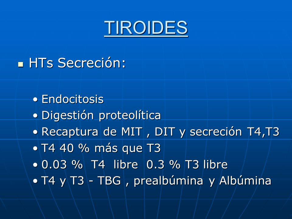 TIROIDES HTs Secreción: Endocitosis Digestión proteolítica