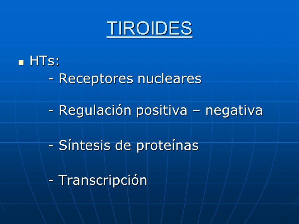 TIROIDES HTs: - Receptores nucleares - Regulación positiva – negativa