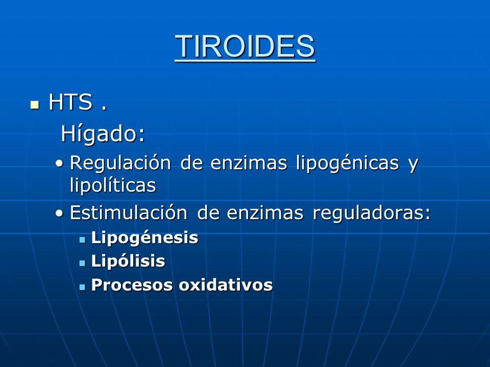 TIROIDES HTS . Hígado: Regulación de enzimas lipogénicas y lipolíticas