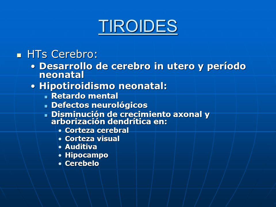 TIROIDES HTs Cerebro: Desarrollo de cerebro in utero y período neonatal. Hipotiroidismo neonatal: