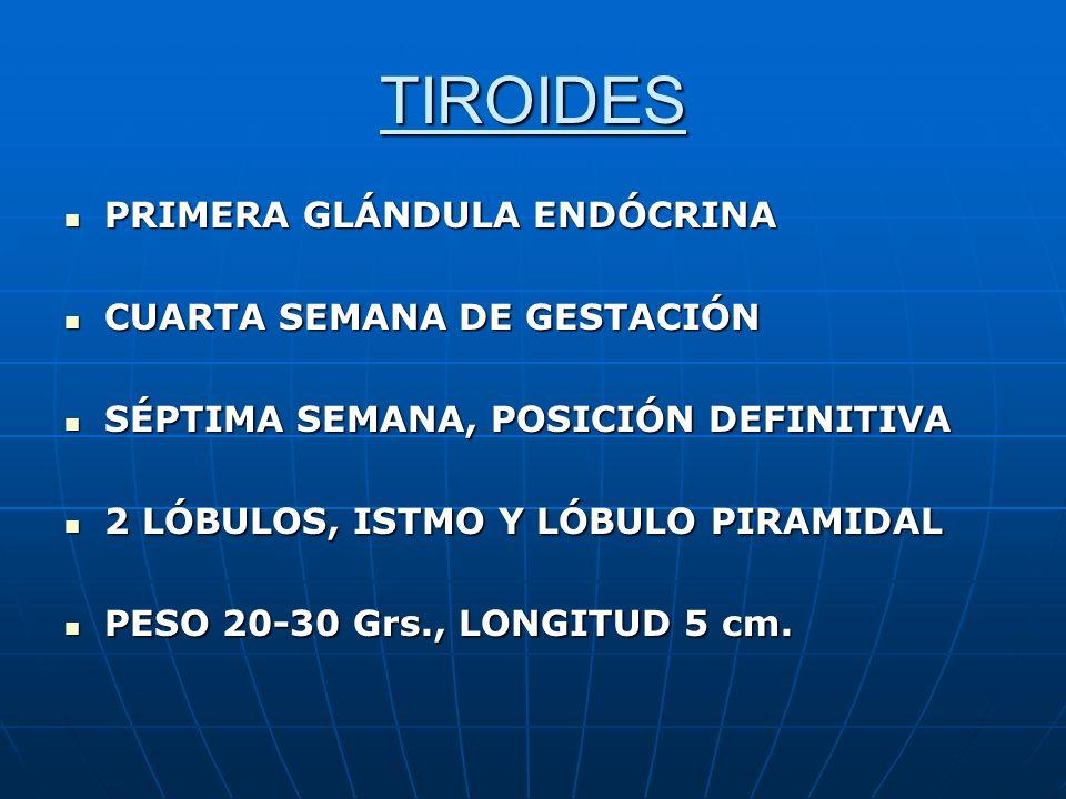 TIROIDES PRIMERA GLÁNDULA ENDÓCRINA CUARTA SEMANA DE GESTACIÓN