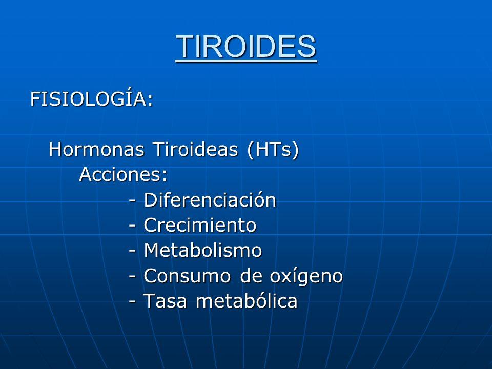 TIROIDES FISIOLOGÍA: Hormonas Tiroideas (HTs) Acciones: