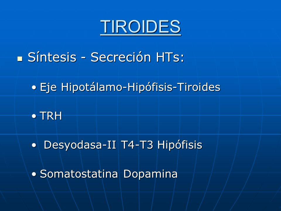 TIROIDES Síntesis - Secreción HTs: Eje Hipotálamo-Hipófisis-Tiroides
