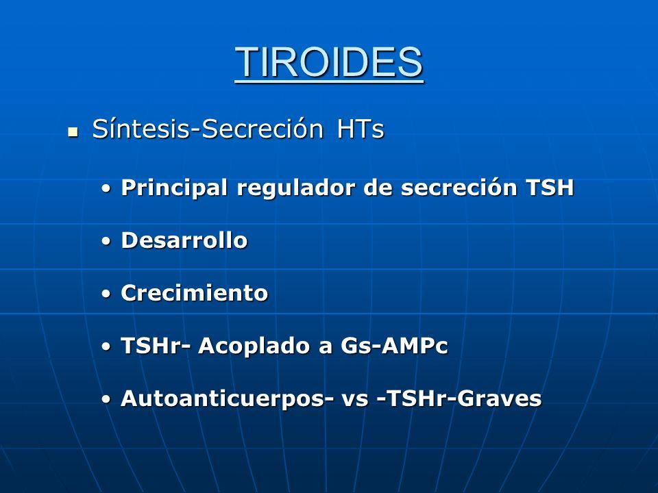 TIROIDES Síntesis-Secreción HTs Principal regulador de secreción TSH
