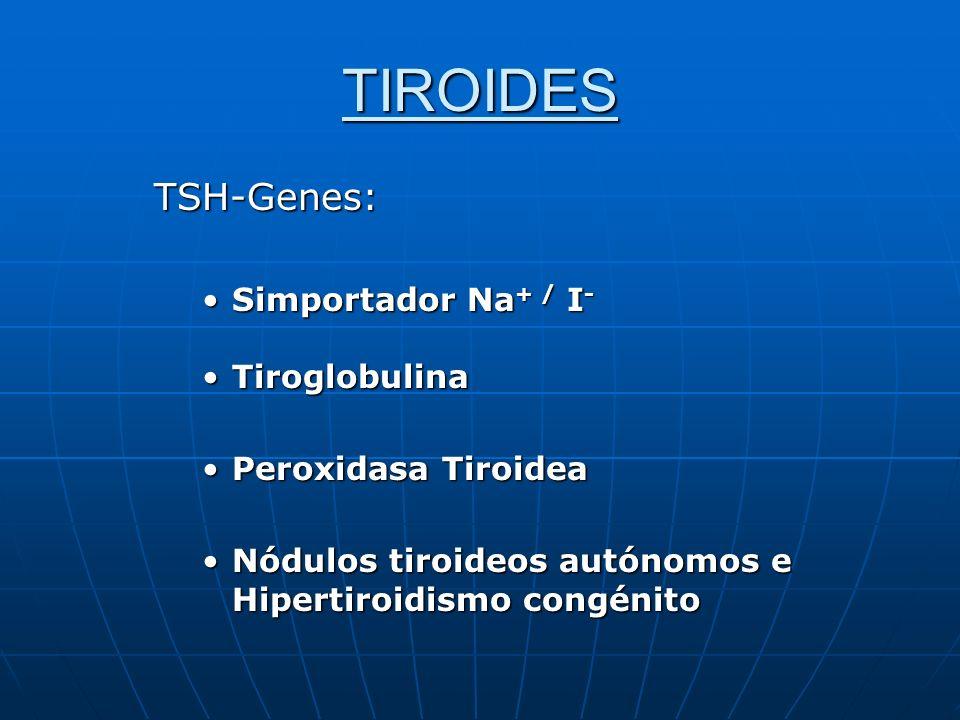 TIROIDES TSH-Genes: Simportador Na+ / I- Tiroglobulina